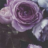 Vinylové tapety na zeď Opus květinová kompozice fialová na tmavém pozadí