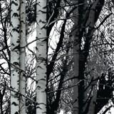 Samolepící fólie Wood - 67,5 cm x 2 m (cena za kus)