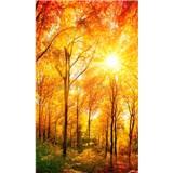 Vliesové fototapety prosluněný les rozměr 150 cm x 250 cm