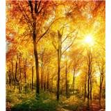 Vliesové fototapety prosluněný les rozměr 225 cm x 250 cm