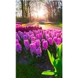 Vliesové fototapety hyacinty rozměr 150 cm x 250 cm