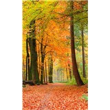 Vliesové fototapety les na podzim rozměr 150 cm x 250 cm