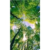 Vliesové fototapety stromy rozměr 150 cm x 250 cm