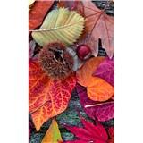 Vliesové fototapety barevné listí rozměr 150 cm x 250 cm