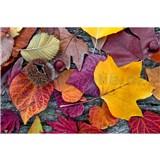 Vliesové fototapety barevné listí rozměr 375 cm x 250 cm
