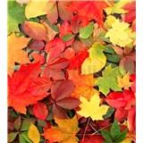 Vliesové fototapety barevný podzim rozměr 225 cm x 250 cm