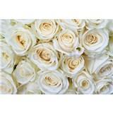 Vliesové fototapety bílé růže rozměr 375 cm x 250 cm