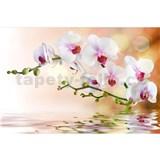 Vliesové fototapety bílá orchidej rozměr 375 cm x 250 cm