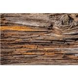 Vliesové fototapety kůra stromu rozměr 375 cm x 250 cm