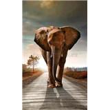 Vliesové fototapety slon rozměr 150 cm x 250 cm