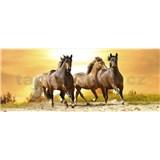 Vliesové fototapety koně při západu slunce rozměr 375 cm x 150 cm