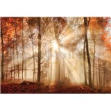 Vliesové fototapety les na podzim rozměr 104 cm x 70,5 cm