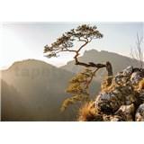 Vliesové fototapety strom na srázu 104 cm 70,5 cm