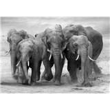 Vliesové fototapety stádo slonů rozměr 368 cm x 254 cm