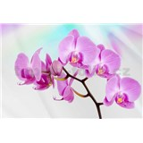 Vliesové fototapety orchidej