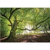 Vliesové fototapety listnatý les rozměr 368 cm x 254 cm