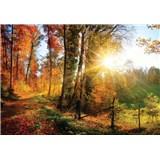 Vliesové fototapety slunce a les rozměr 368 cm x 254 cm