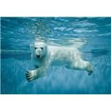 Vliesové fototapety lední medvěd ve vodě rozměr 368 cm x 254 cm
