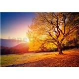Vliesové fototapety podzimní strom rozměr 368 cm x 254 cm