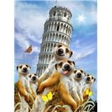 Vliesové fototapety surikaty a Šikmá věž v Pise rozměr 184 cm x 254 cm