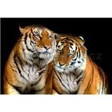 Vliesové fototapety tygři rozměr 312 cm x 219 cm