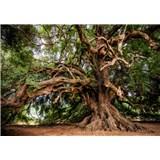 Vliesové fototapety letitý olivovník rozměr 368 cm x 254 cm