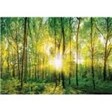 Vliesové fototapety prosluněný les rozměr 368 cm x 254 cm