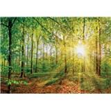 Vliesové fototapety paprsky slunce v lese rozměr 368 cm x 254 cm