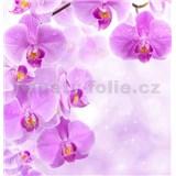 Vliesové fototapety fialová orchidej rozměr 312 cm x 219 cm