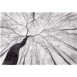 Fototapety koruna stromu rozměr 366 cm x 254 cm - POSLEDNÍ KUSY