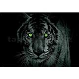 Vliesové fototapety tygr zelené oči