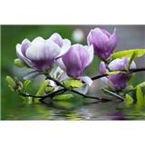 Vliesové fototapety rozkvetlá magnolie