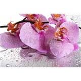 Vliesové fototapety růžová kropenatá orchidej rozměr 312 cm x 219 cm