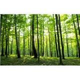 Vliesové fototapety les rozměr 312 cm x 219 cm