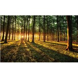 Fototapety les a západ slunce