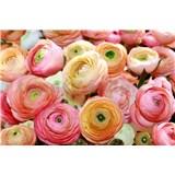 Fototapety květy růže