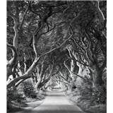 Vliesové fototapety Hefele cesta se stromořadím, rozměr 250 cm x 280 cm