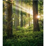 Vliesové fototapety Hefele les skřítků, rozměr 250 cm x 280 cm