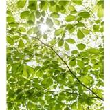Vliesové fototapety Hefele les na jaře, rozměr 250 cm x 280 cm