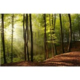 Vliesové fototapety les rozměr 375 cm x 250 cm