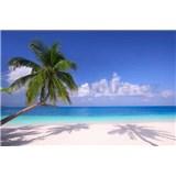 Vliesové fototapety palmy na pláži rozměr 375 cm x 250 cm