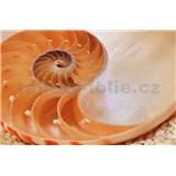 Fototapety National Geographic Nautilus rozměr 184 cm x 127 cm