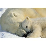 Fototapety National Geographic Polar Bears