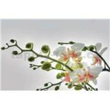 Fototapety orchidej