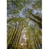 Fototapety koruny stromů