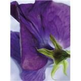 Fototapety Viola rozměr 184 cm x 254 cm