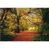 Fototapety Autumn Forest rozměr 388 cm x 270 cm
