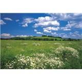Fototapety Meadow rozměr 368 cm x 254 cm