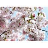 Fototapety National Geographic Spring rozměr 368 cm x 254 cm