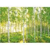Fototapety les břízy